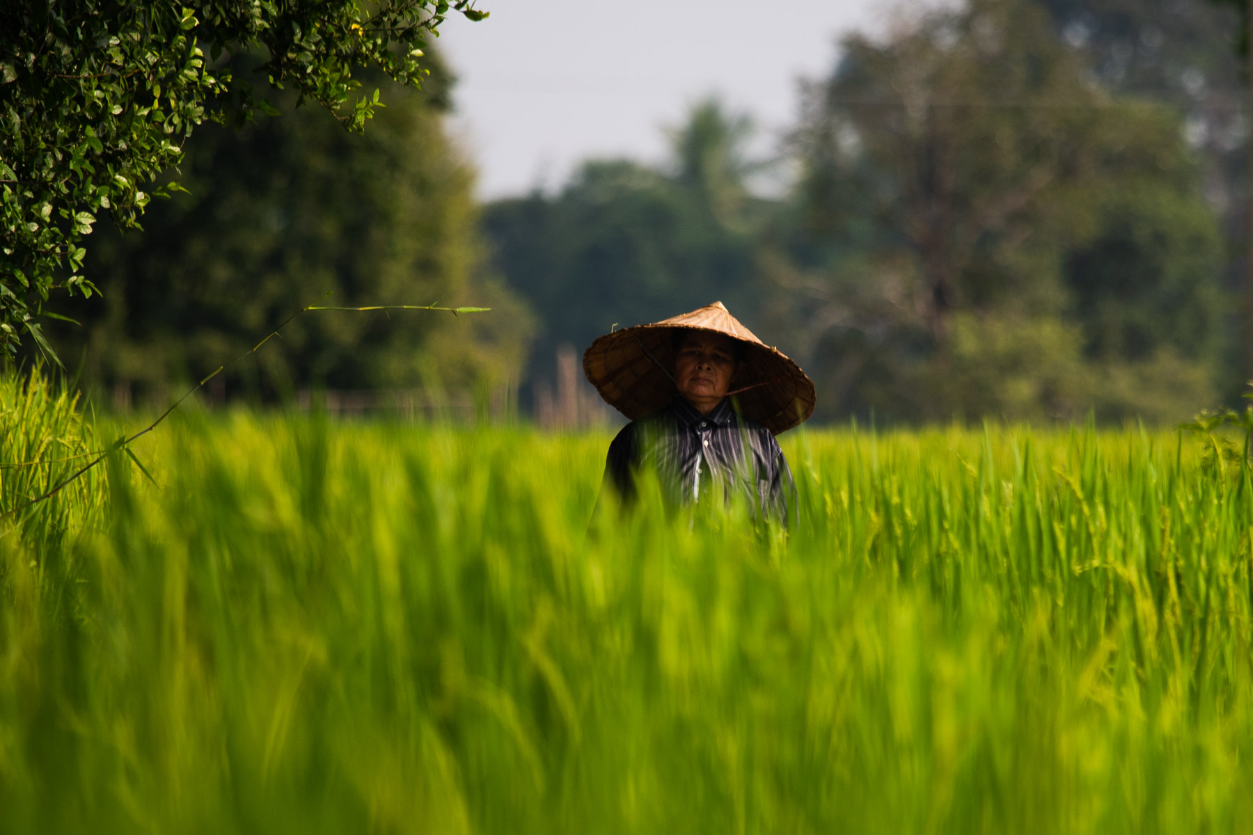 Old woman with bamboo hat