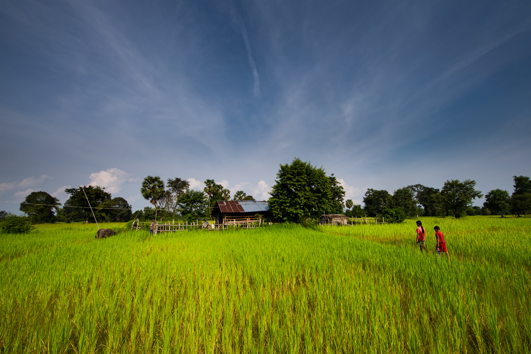 Landscape of rice field and two children
