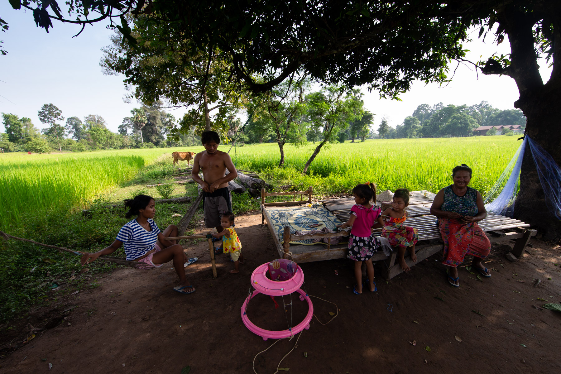 Family in middle of Rice field